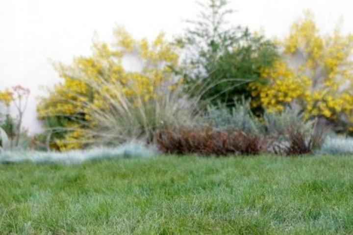 Carex Pansa Close-Up