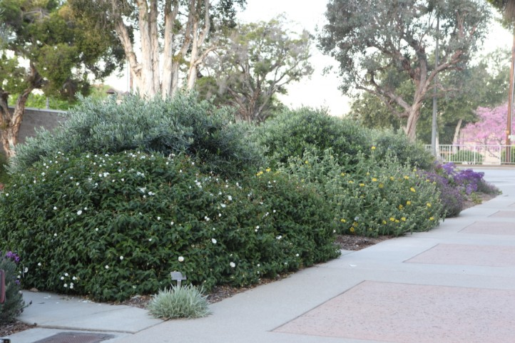 Large Bushes Cool Path