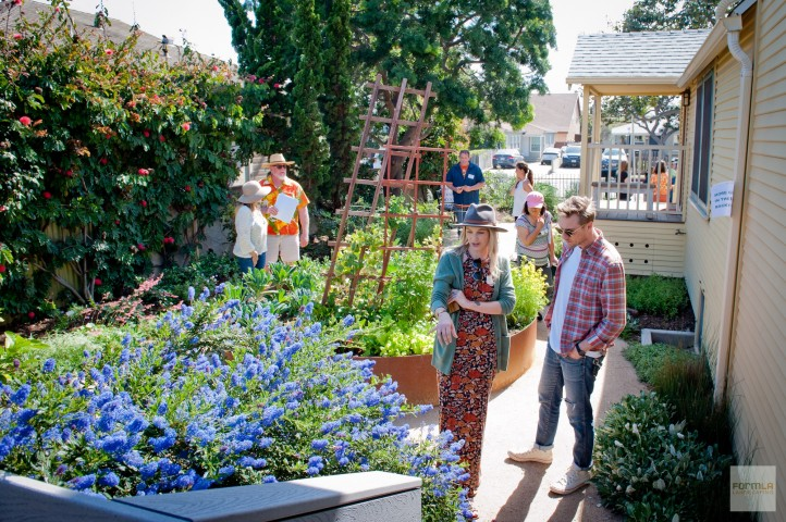 Show-Stopping Ceanothus