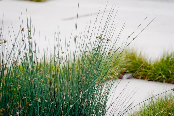 Juncus with Carex Joints