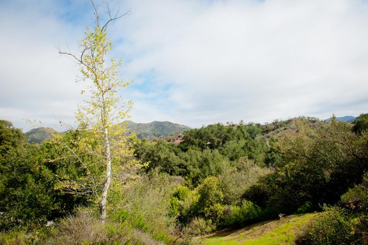 Treeful Landscape