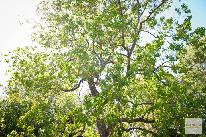 Abundant Tree Canopy