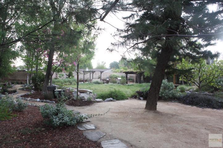 Tree Canopy Slows Rain