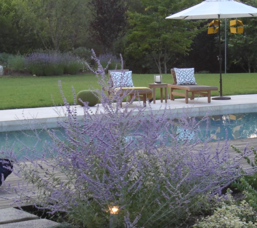 Salvia-Pool