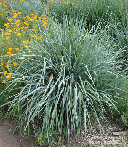 Miller And Sons >> Strike Silver | FormLA Landscaping
