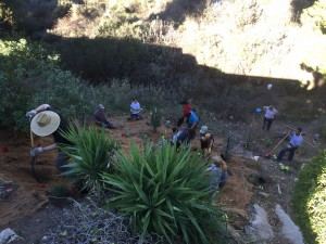 south-slope-planting-11-5-16
