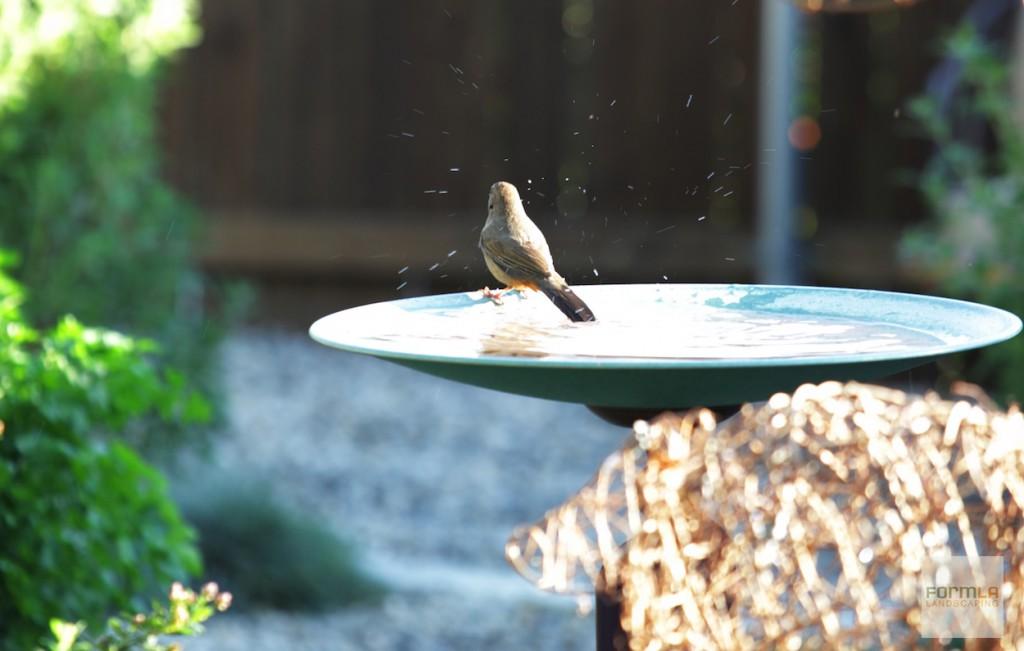 FormLA_Birds-Birdbath_Tanker