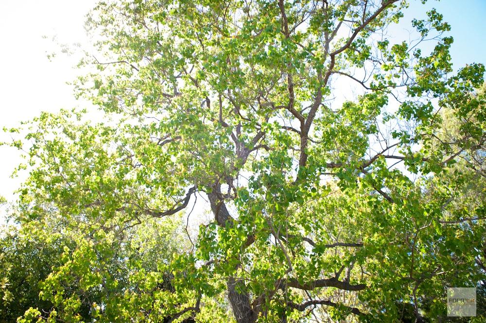 FormLA_Tree_Joyce-LHP-55WEB